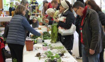 Le Troc aux plantes de Veneux, le rendez-vous des passionnés du jardin